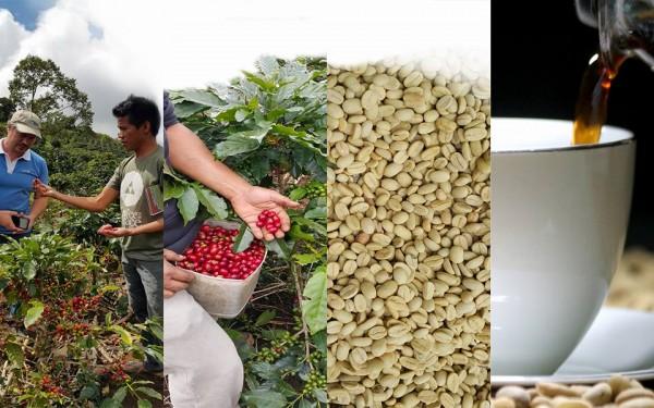 PCBI, Bean to Brew, Farm to Store