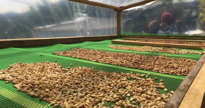 Trading Coffee Philippine Coffee Board